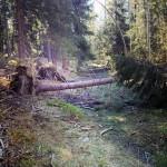 Omkullfallna träd, Gröna spåret