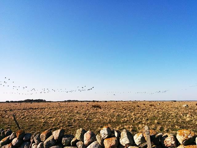 Fågelflykt