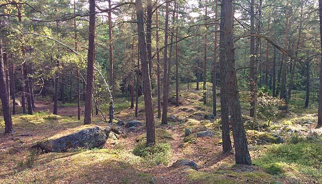 Skog i sol