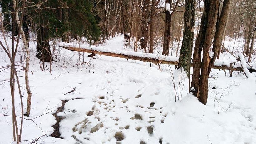 Löpningens dag 7 februari 2015