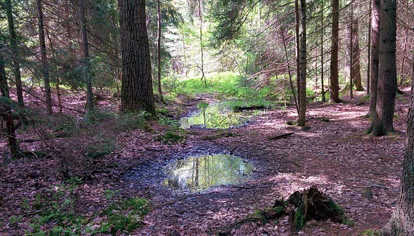 Fagersjöskogen