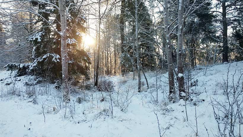 Krispig vinterstig