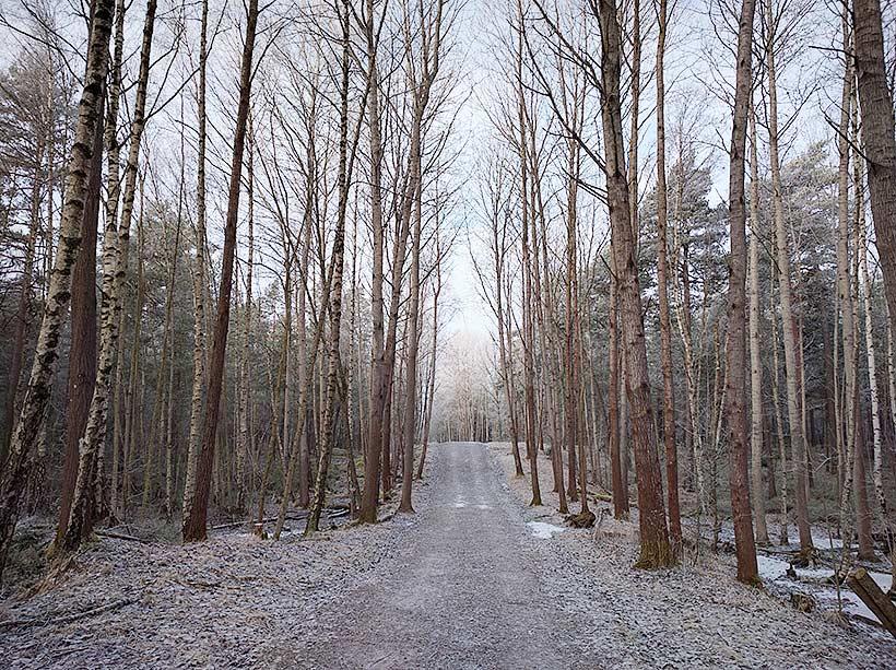 Majroskogen, mars 2016